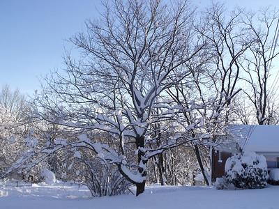 February Snow Pounding