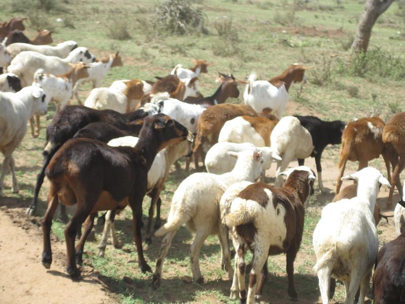 Tanzania14-4105.jpg