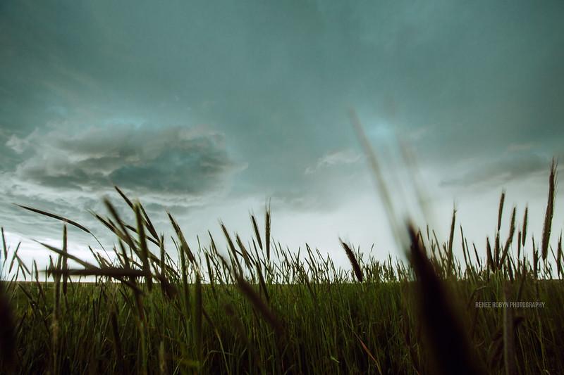 Storm_W0C5141WEB.jpg