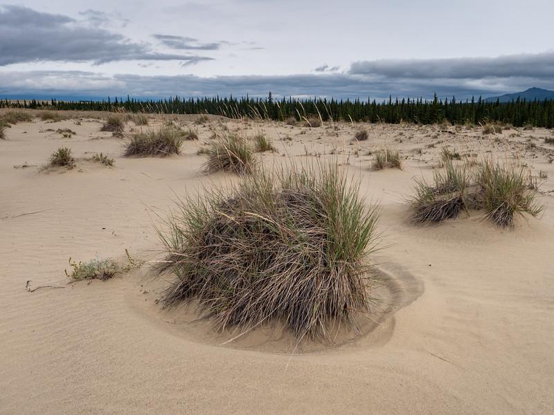 Tussock Grasses