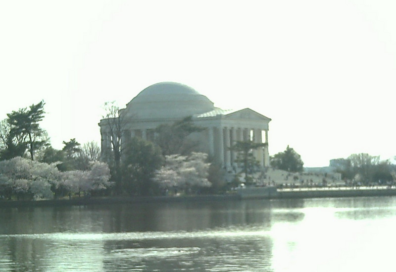 Jefferson and Blossoms.jpg