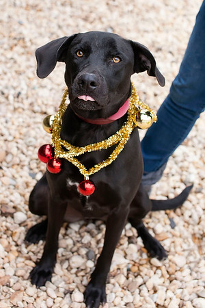 QAC Adoptable Pets-Holidays 2012