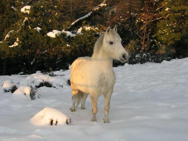 Chardae Pony