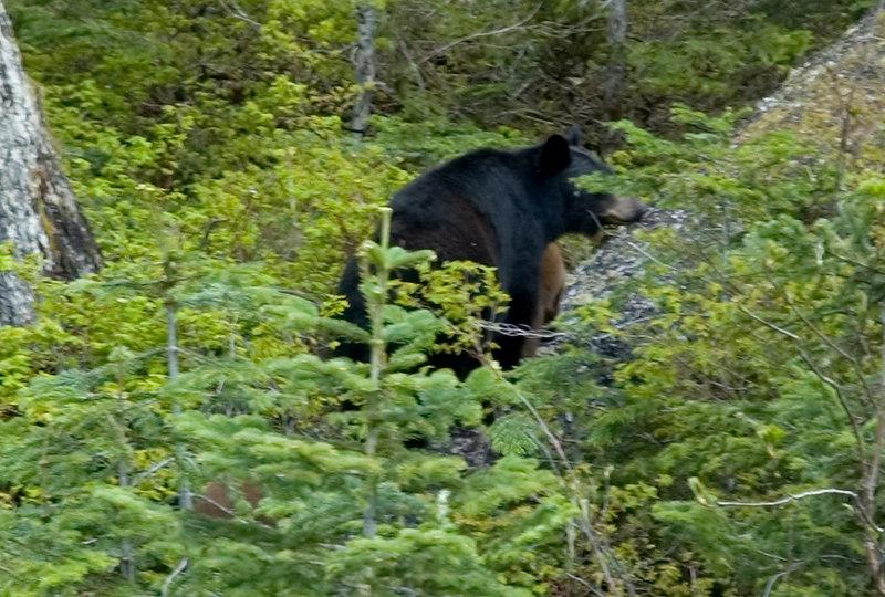 Bears_6.jpg