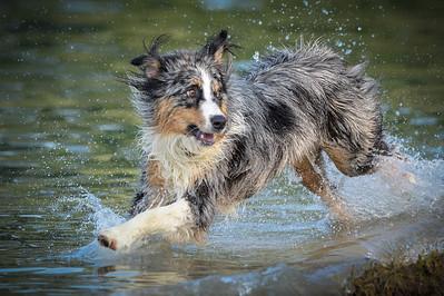 Dog | Hund