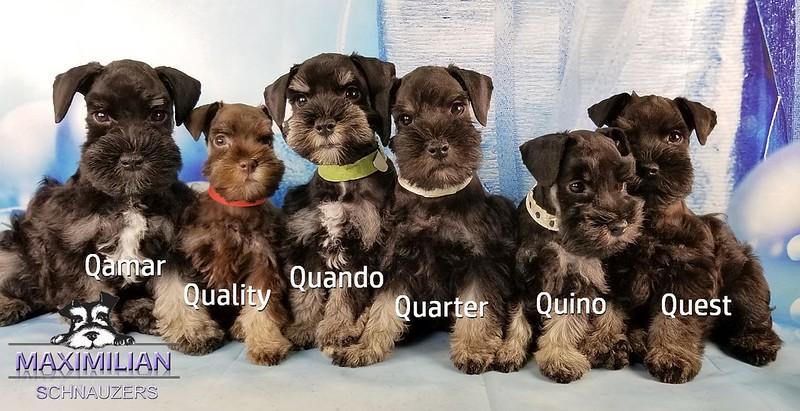 Hettie Pups 012.jpg