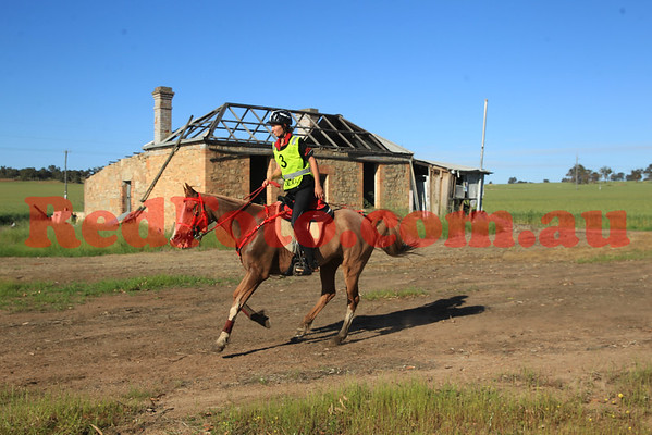 2014 10 04 Tom Quilty Gold Cup Endurance Gells Cottage