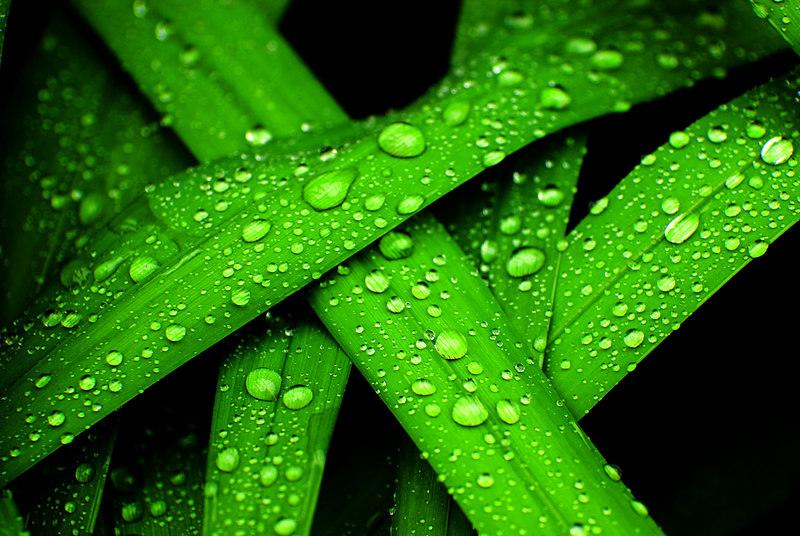 Green-Rain.jpg