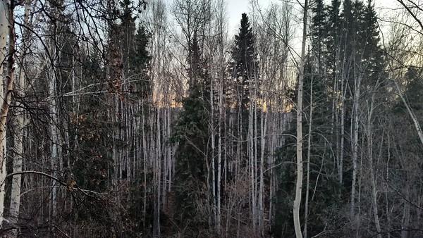 Alaska Trip 216
