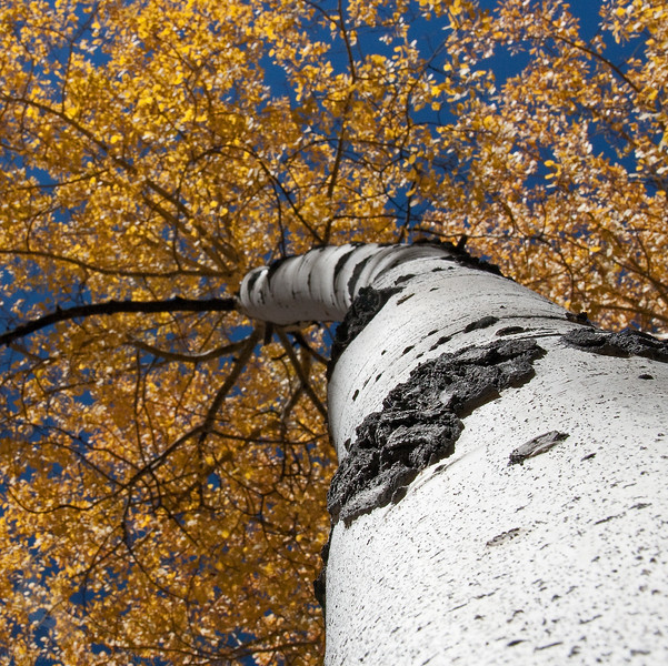 Trunk and Leaves.jpg