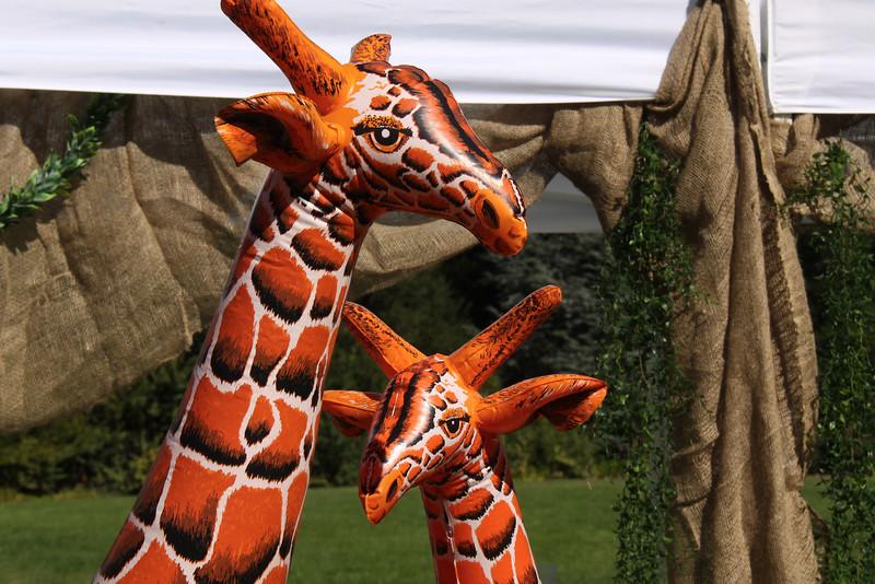 bella-safari-5543.jpg