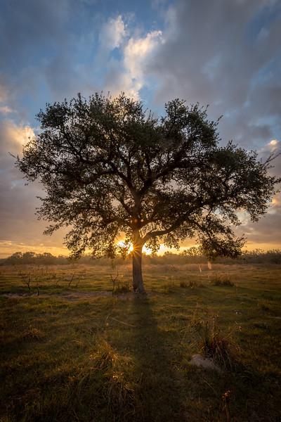 Lone Oak 2