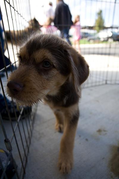 Petsmart_Puppies_RLoken_009_9041.jpg