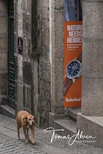 Porto November 2019