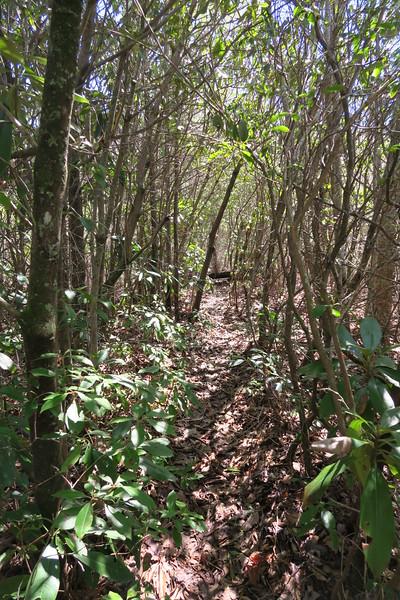 Shelton Pisgah Trail - 3,860'