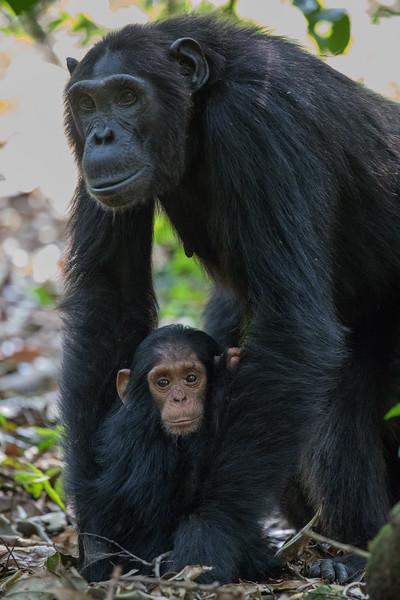 African_Apes_0218_PSokol-800.jpg