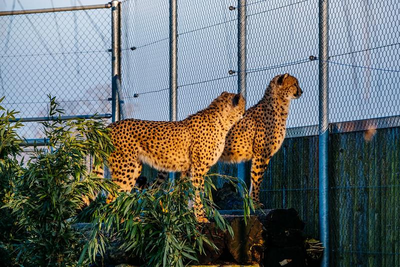 Tonis Zoo-0200.jpg