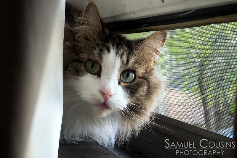 Our cat, Tizzy, is excited to be able to hang out in the window.