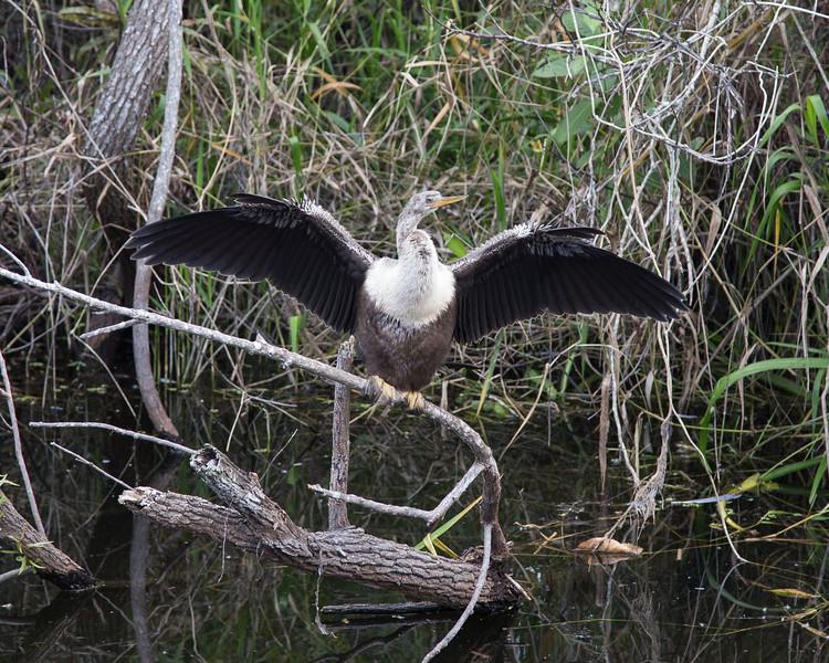 Everglades NP-0359-Select_E.jpg
