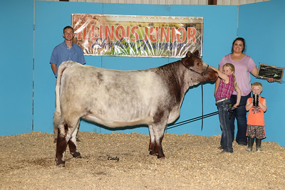 2019 Illinois Shorthorn Junior Preview Show