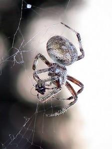 nc-1st place tie-Spider Snack-Susan Bbaxter