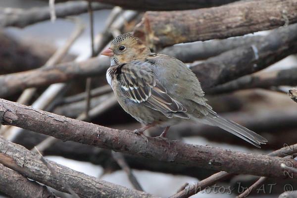 2012-11-03 Riverlands Migratory Bird Sanctuary