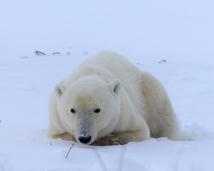 polar bear website 4.jpg