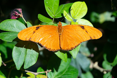 Butterfly Conservatory, Key West, FL - Dec. 2019
