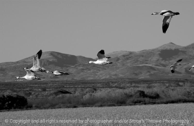 birds-bosque_del_apache_nm-01dec06-9809