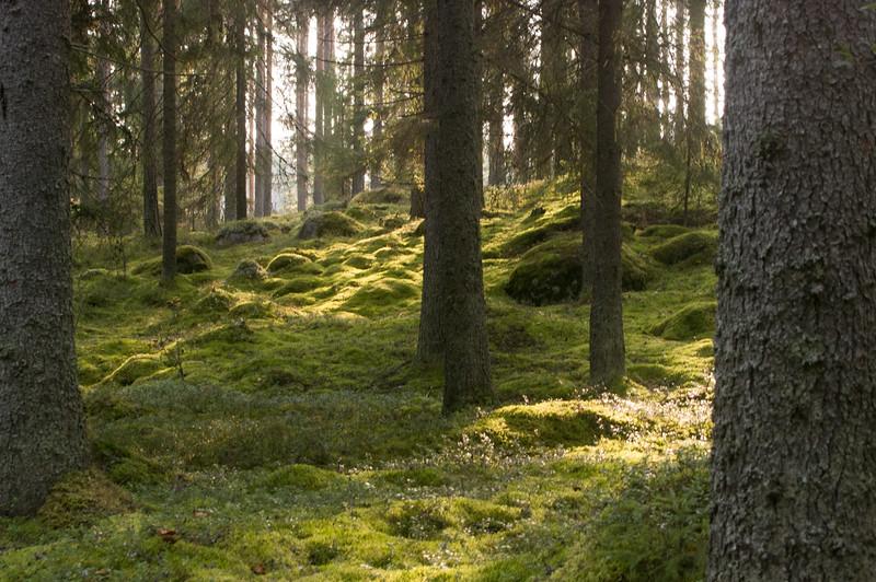 Woods_Finland-9.jpg