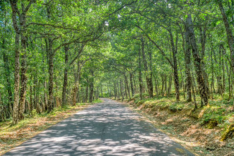 Road through an oak grove, Riaza, Segovia, Spain.