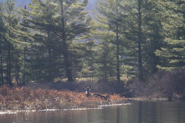 William C. Whitney Wilderness: Round Lake -  May 2007