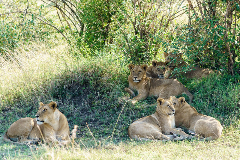 Kenya 2015-03586.jpg