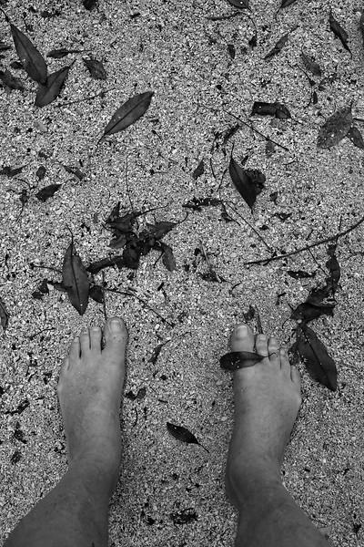 Descalzo entre hojas