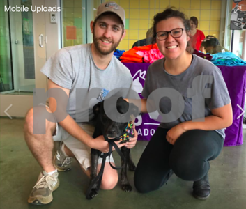 longview-dog-shot-by-arrow-adopted-by-new-family