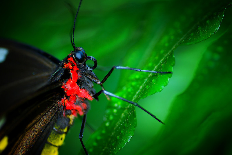butterfly close up .jpg