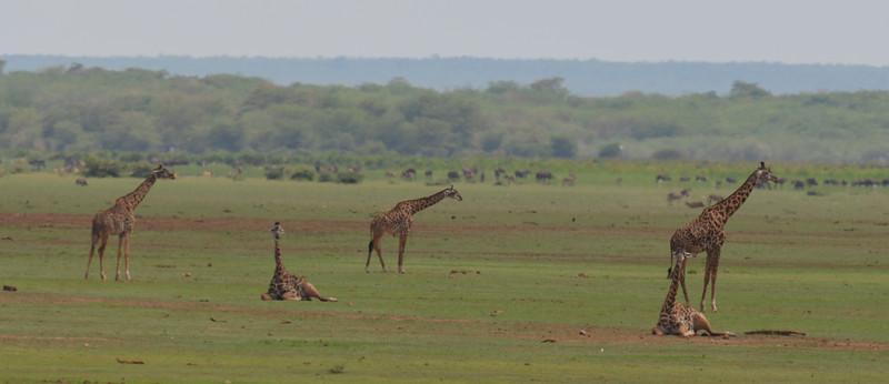 East Africa Safari 460.jpg