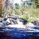 creek_1.jpg