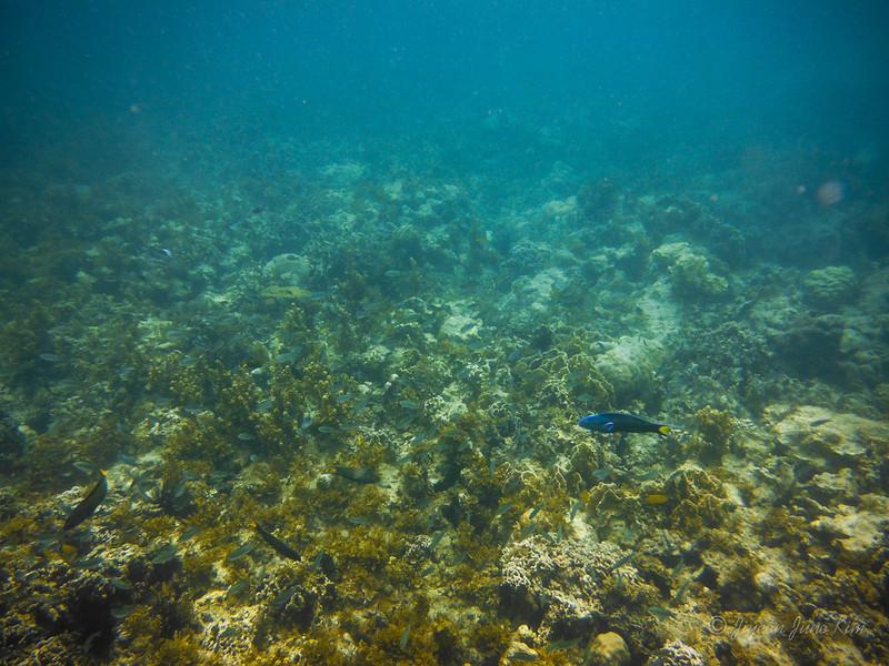 Sagay Marine Reserve underwater scene