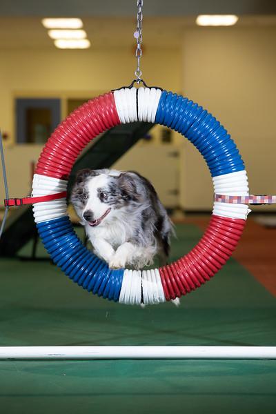 SPCA_Agility-1.jpg