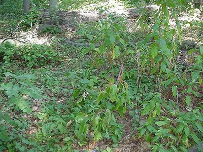 Hillside Plant Photo Gallery
