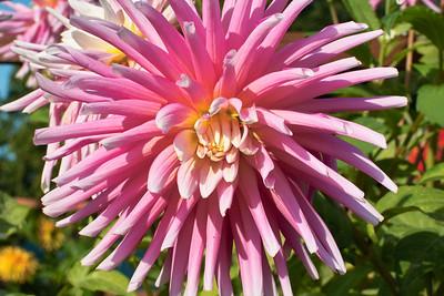 Group 4 - flower macro 1
