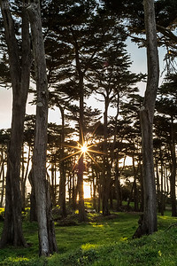 20170201_SAN_FRANCISCO (15 of 24)