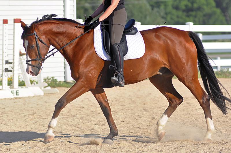 Horses July 2011 235a.jpg