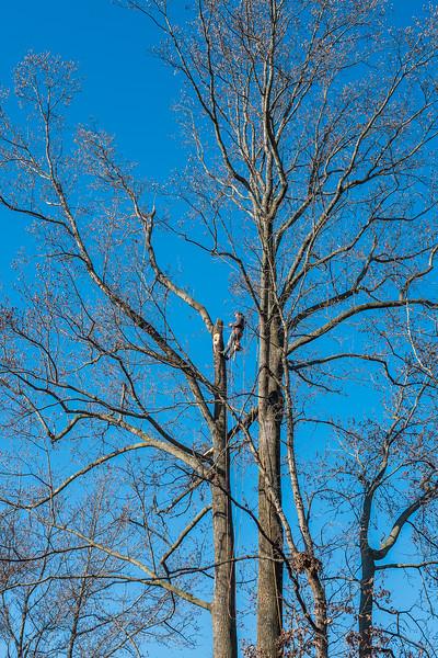 TreeGone