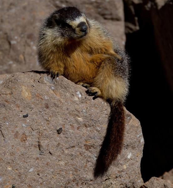 Marmot Upper Gorge   Mammoth Lakes 2014 03 22-5.CR2