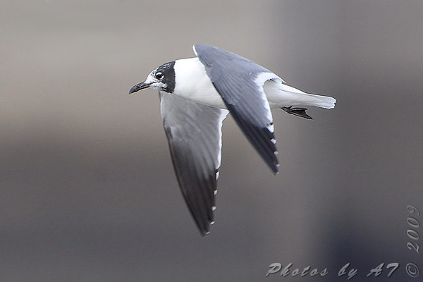 2009-02-14 Riverlands Migratory Bird Sanctuary