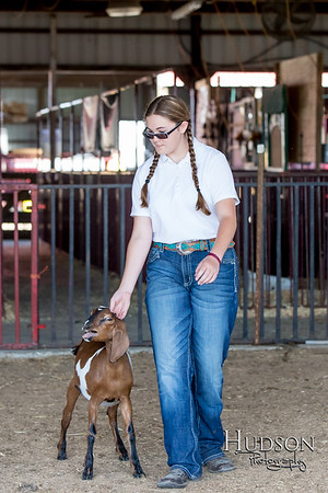 Dairy Goat Show