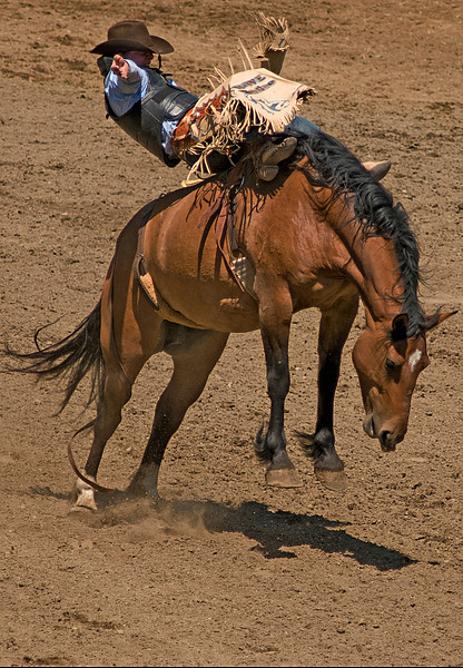 COOMBS RODEO-2009-3522A.jpg