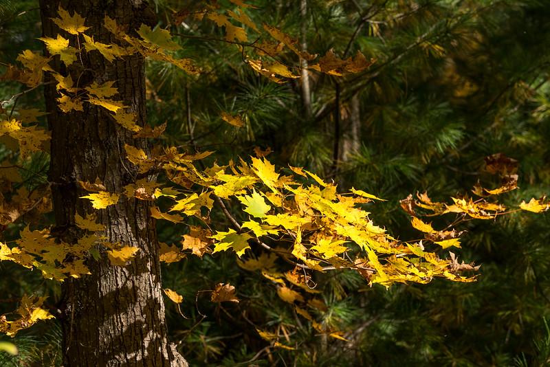 queen esther-foliage-2015-14.jpg